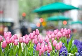cveti-dlya-goroda